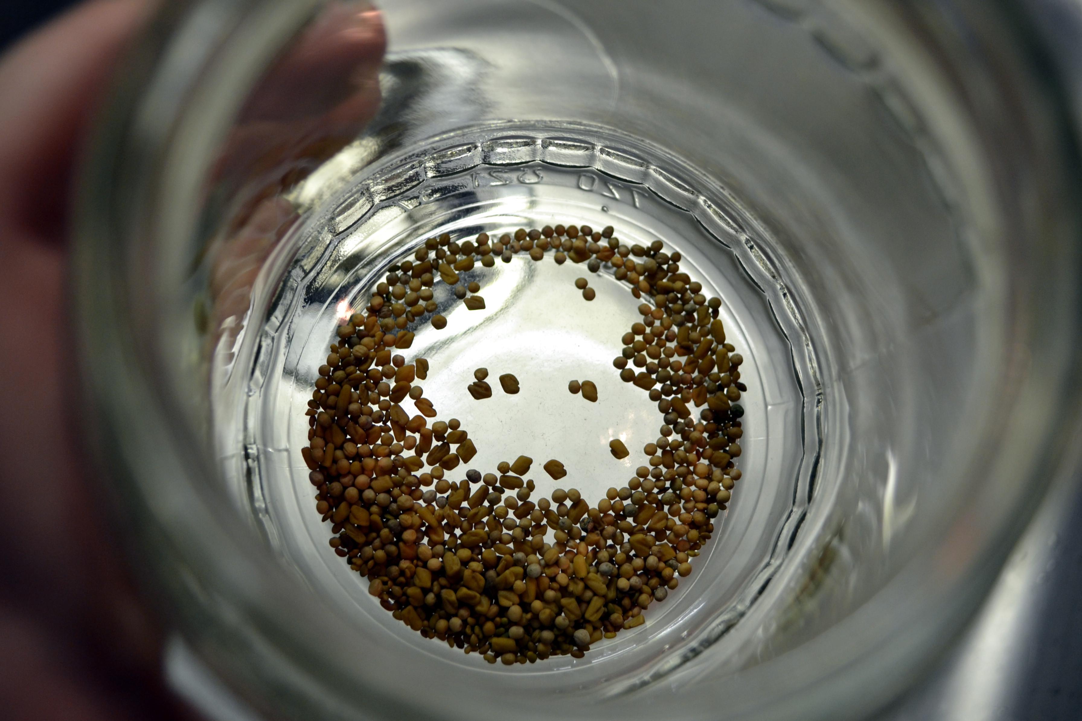 Nun schüttet ihr eure Keimlinge in das Glas - aber Achtung: Nicht zu viele, ein bis zwei Teelöffel reichen.