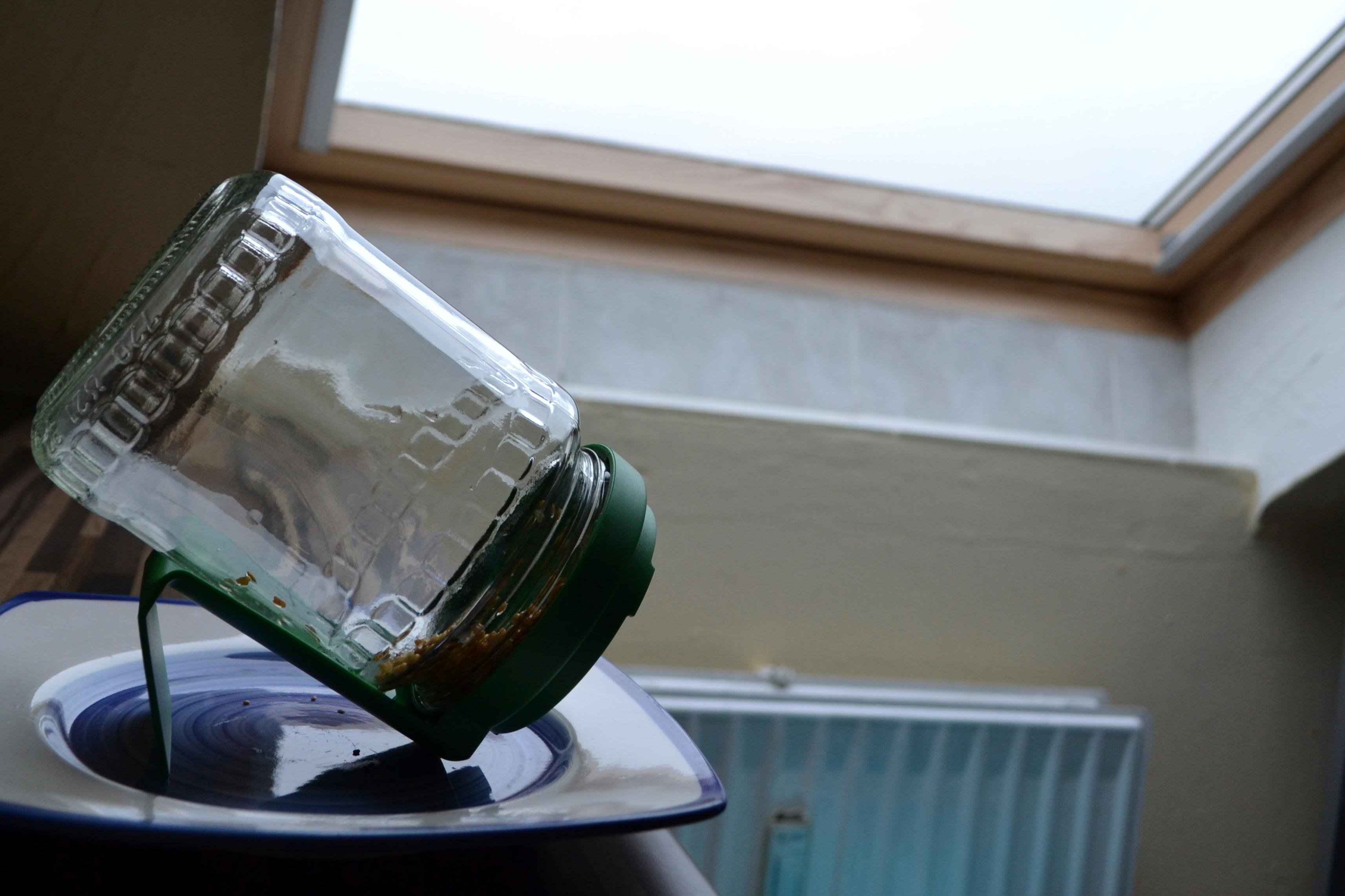 ...und stellt das Glas an einen hellen Ort (am besten auf einen Teller, die Öffnung des Glases zeigt nach unten\). Ab sofort müsst ihr die Keimlinge täglich zweimal mit Wasser spülen. Das heißt: Deckel auf, Wasser rein, etwas schütteln, Deckel drauf und Wasser wieder rausschütten.