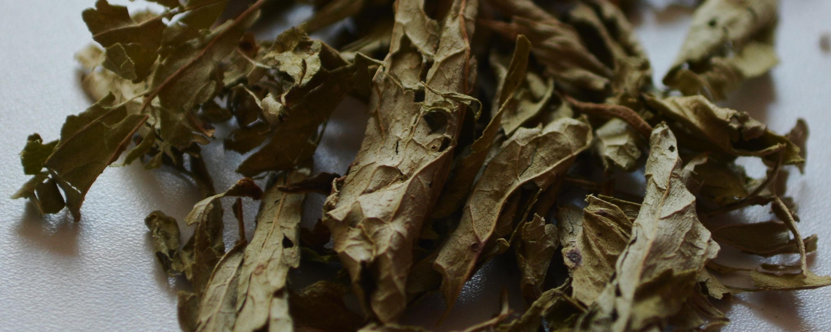 Dies sind getrocknete Steviablätter, die ebenfalls zum Süßen von Speisen geeignet sind. Auch im Tee kann man sie verwenden. Ihr könnt eine Steviapflanze auch selbst anbauen.